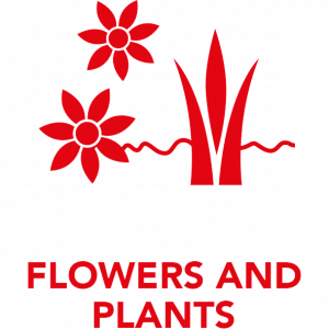 Flowers_and_Plants